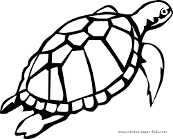 Small Picture Realistic Turtle Coloring Pages Coloring Coloring Pages