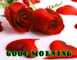 Good Morning Red Rose Hd Images Download