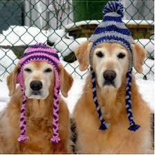 Crochet Dog Hat Pattern Impressive Looking For This Dog Hat Pattern