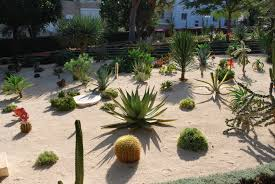 Small Picture Awesome Desert Landscaping Ideas with Lovely Desert Plants Amaza