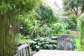 exotic garden in a cool climate