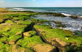 Interesting Review Of Coquina Outcrop Kure Beach Nc