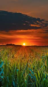 Sunflower Field iPhone 11 pro Max ...