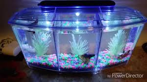 betta fish tanks. Contemporary Tanks New 3 Betta Fish Tank Kit Plus Pickups Please Subscribe Show Love For  The Hobby EmoneyFlowerHornsu0026CichlidsNYC EmoneyFlowerHornsu0026CichlidsNYC Intended Betta Fish Tanks R