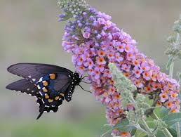 Image result for butterfly plants