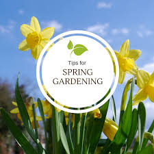 it happens every year tips for spring gardening