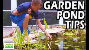 garden pond tips water pond plants