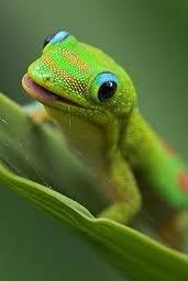Image result for geckos