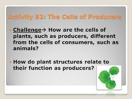Producer And Consumer Venn Diagram Activity 82 The Cells Of Producers Challenge How Are The