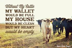 Live Stock Quotes Impressive Livestock Quotes On Twitter HttptcoWA48TO48d48IL