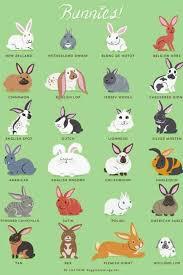 Bunny Chart Rabbit Breeds Pet Rabbit Cute Bunny