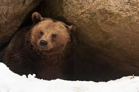 Image result for hibernation photos