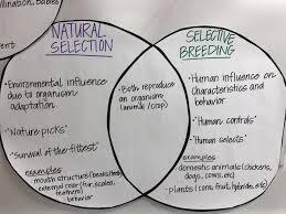 Plant And Animals Adaptations Venn Diagram Venn Diagram Natural Selection And Selective Breeding Manual E Books