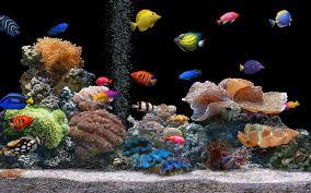 fish tank wallpapers. Fine Tank Free 3D Fish Tank Wallpaper  WallpaperSafari Throughout Wallpapers O