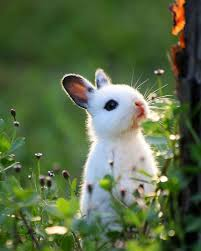 super cute baby bunnies. Plain Cute Baby Bunny In The Woods Inside Super Cute Bunnies R