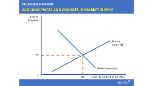 Avocado Price Chart 2018 Avocado Prices Supply And Demand In Action
