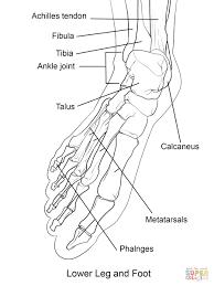 Human Foot Bones Coloring Pages Page Diywordpressme