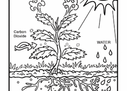 Coloring Pages Printables Educationcom