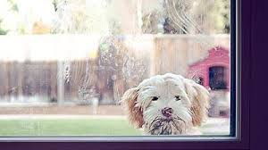 Pet Allergies: How to Reduce Pet Allergens at Home - Health