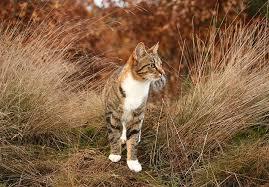 a beginner s guide for creating an indoor cat garden meowing cats cat website