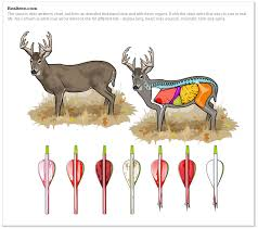 Deer Vitals Chart Identifying The Shot From The Recovered Arrow Imgur