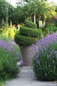 Maintenance Free Garden Designs Brilliant Low Maintenance Plants For Beautiful Gardens The