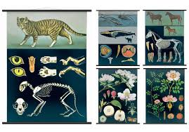 Vintage Wall Chart Season Preview Stunning Vintage Wall Charts