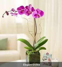 orchid plants one spike