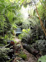 Small Picture Jungle Garden shady teduh segar Jungle Gardens Pinterest
