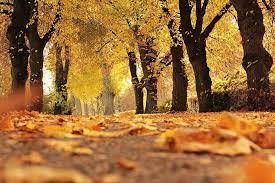 """Résultat de recherche d'images pour """"free autumn"""""""