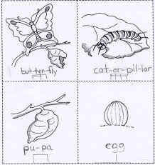Butterfly Activities   EnchantedLearning as well The 25  best Life cycle of butterfly ideas on Pinterest together with FREE Penguin Life Cycle Worksheets moreover Stages of Butterfly Life Worksheet   Turtle Diary besides Butterfly Life Cycle Craft additionally  together with Make this butterfly life cycle wheel to teach kids about the furthermore  together with 24 best ciclos de vida images on Pinterest   Life cycles  Animales moreover Butterfly Life Cycle   In Noodles moreover Best 25  Life cycle of butterfly ideas on Pinterest   Lifecycle of. on erfly life cycle worksheet for kindergarten best photos