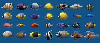 Saltwater Aquarium Fish Chart Saltwater Aquarium Fish