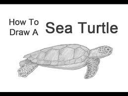 Small Picture How to Draw a Green Sea Turtle YouTube