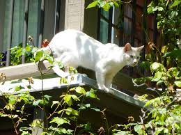 tresco loves the outdoors and would have a difficult time as an indoor cat