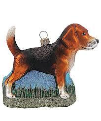 Beagle Hund
