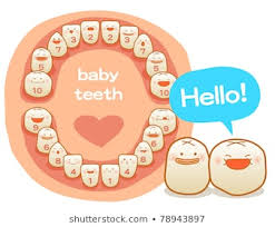 Teething Chart For Babies Royalty Free Baby Teeth Images Stock Photos Vectors Shutterstock