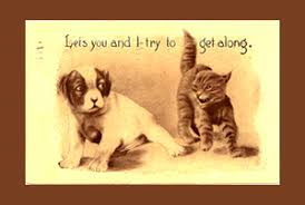 cats and dogs fighting quotes. Intended Cats And Dogs Fighting Quotes