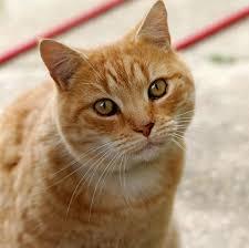 cat. Delighful Cat Inside Cat