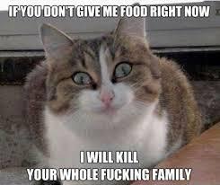 Crazy Cat | WeKnowMemes via Relatably.com