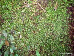 TERRAIN  Taranaki Educational Resource Research Analysis Wall Climbing Plants Nz