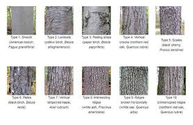 Tree Bark Identification Good To Know When Identifying