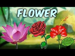 Learn English Flower Names With Pictures Characteristics Of Different Flowers Educational Videos
