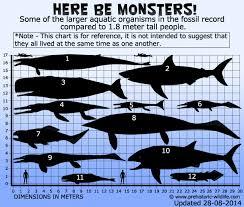 Shark Size Comparison Chart C Megalodon