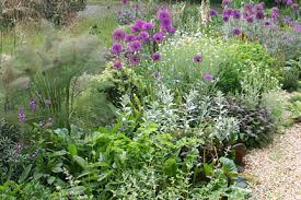 drought resistant garden. Beautiful Drought Quick Facts Suitable For All Gardens And Drought Resistant Garden T