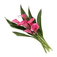 Calla Lily Color Chart Calla Vs Peace Lily Home Guides Sf Gate