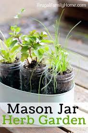 in home herb garden grow kit
