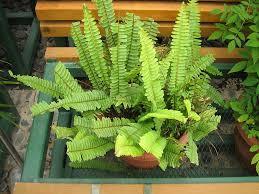 cat friendly plants jimsmowing com au