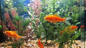 Fish Tank Do You Need A Fish Tank Protein Skimmer Howcast The Best How