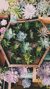 Shades of green, teal, & lavender succulents by cornelia