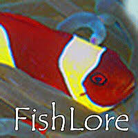 Mardel Fish Disease Chart Freshwater Fish Disease Symptoms And Treatment